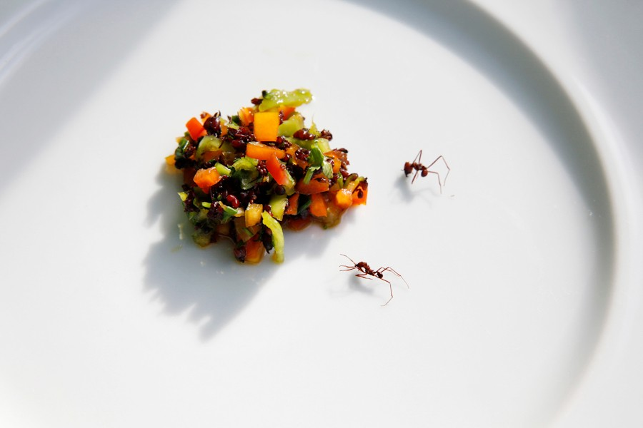 dish with ants