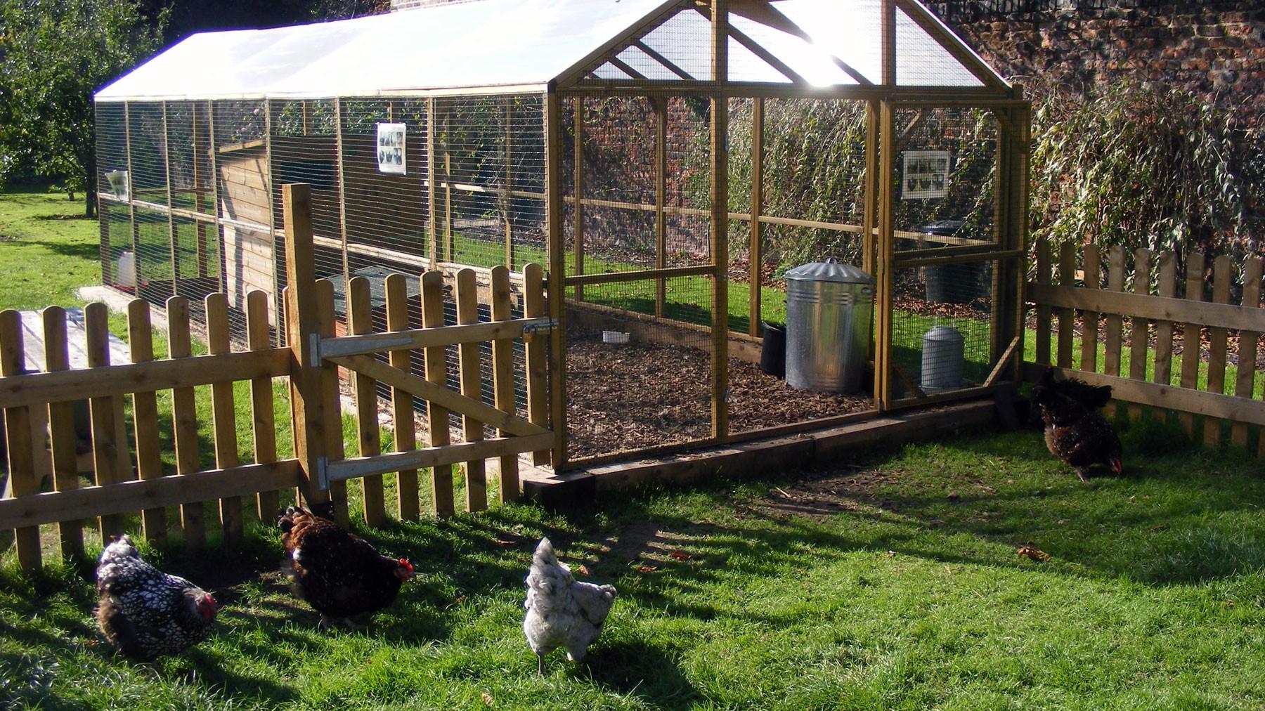 growhampton-chickens