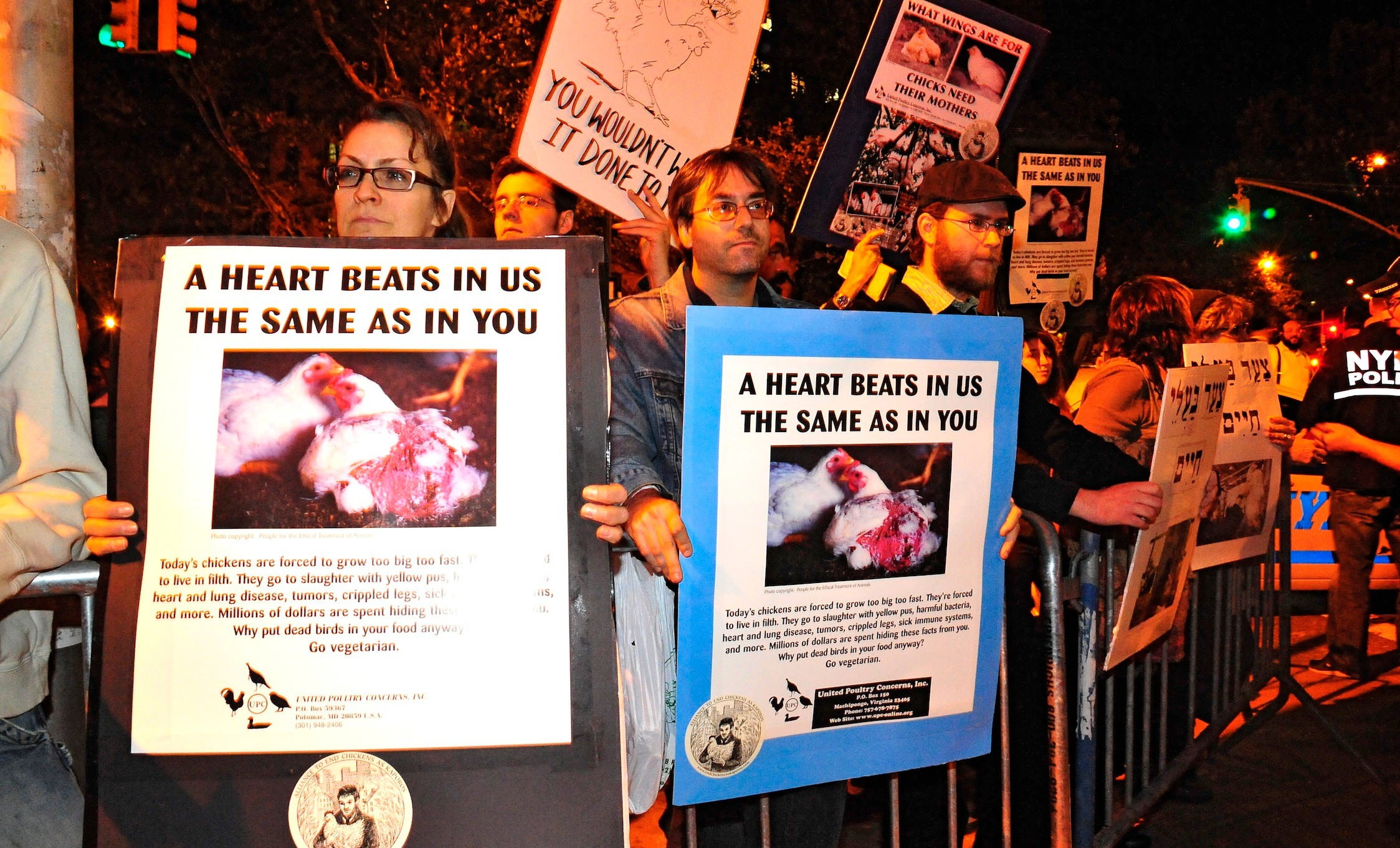 The Alliance to End Chickens as Kaporos is hosting three peaceful 2-hour protest demonstrations the first week of October in Brooklyn, New York.