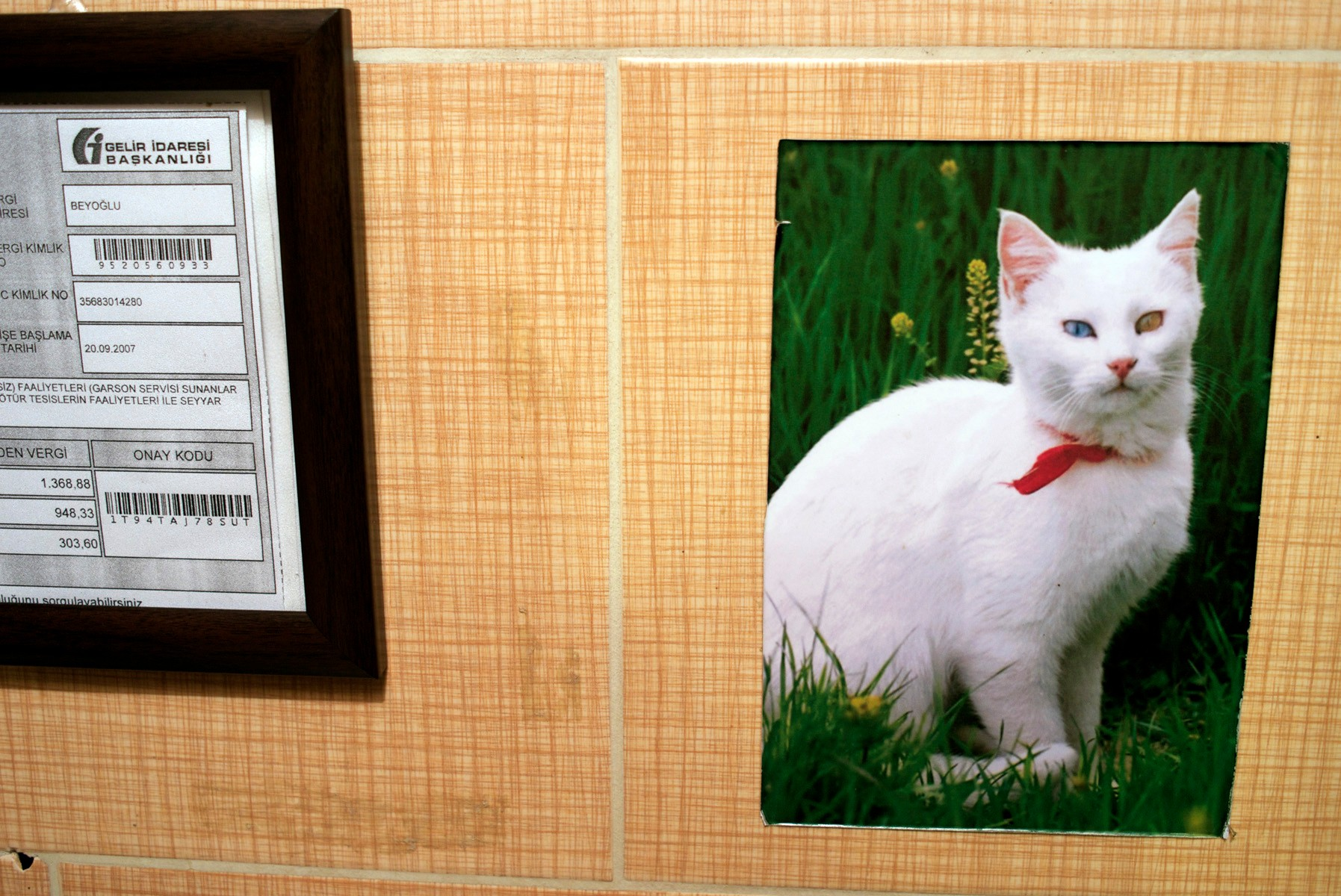 A photo of one of Van's famous cats.
