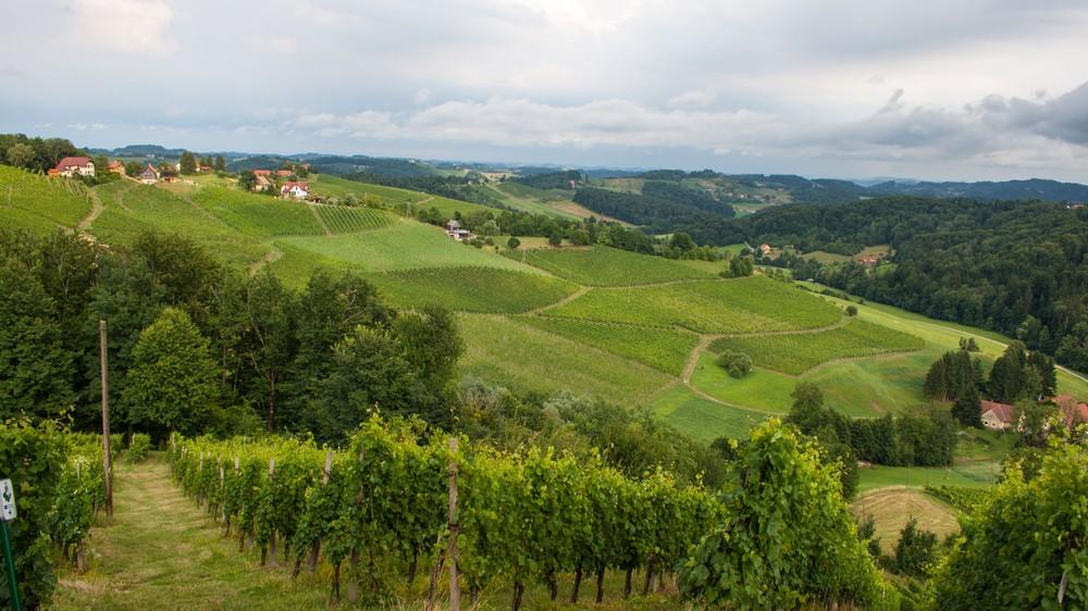 slovenia-wine-producer
