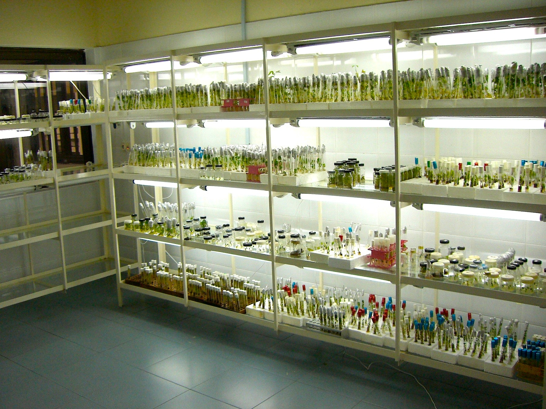 tissue cultures in a lab- photo by global crop diversity trust