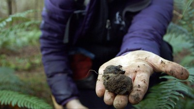 Hunter and Gatherer: Truffle Hunter