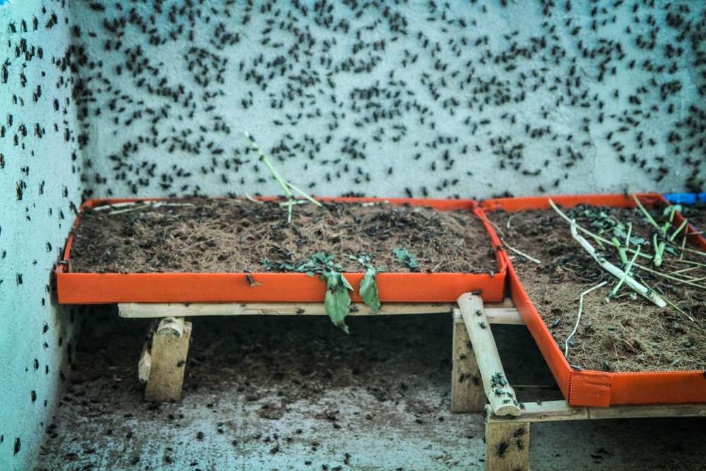 Insect Farming Can Buy You A Toyota In Thailand Munchies