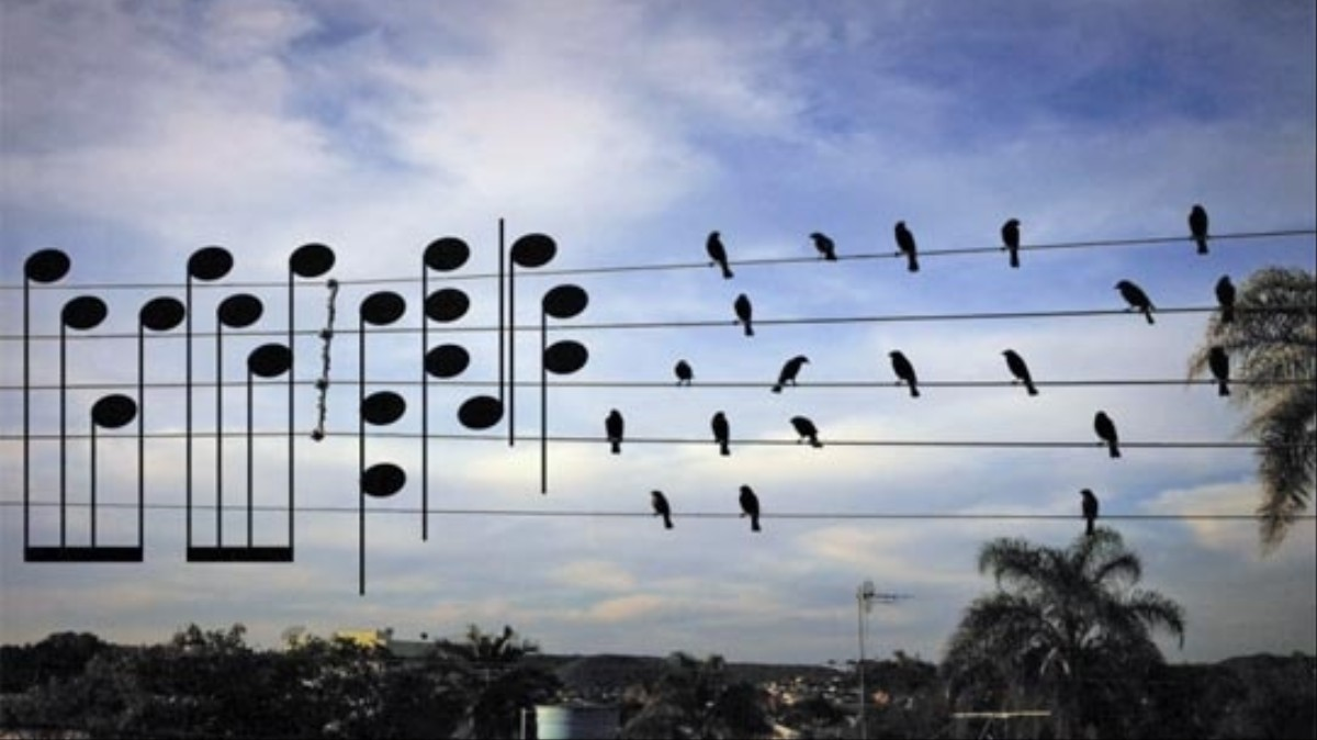 This Guy Turned a Photo of Birds Perched on a Wire Into Sheet Music ...