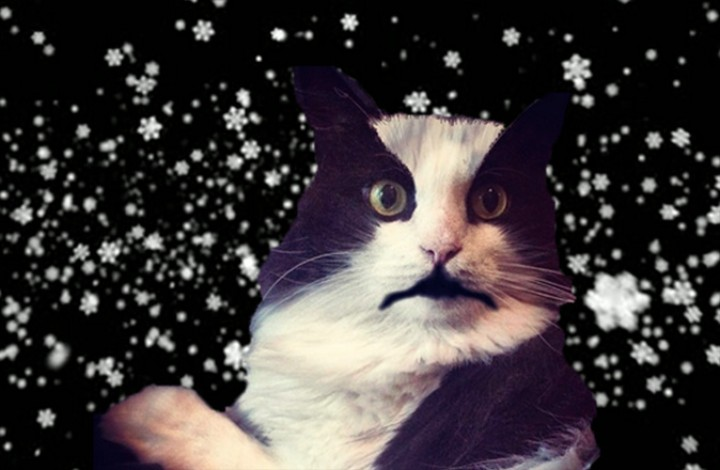 We Interviewed a Bunch of Black Metal Cats; Yes, Actual Cats