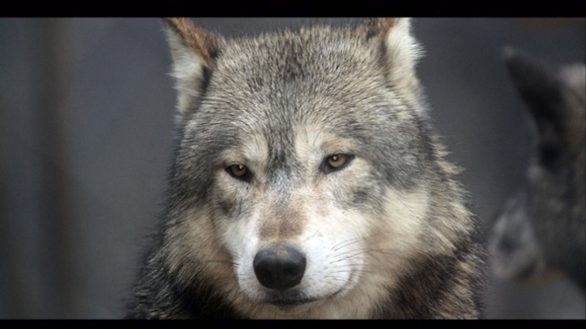 Waiting for wolves cdq the oral history of a kanye west song waiting for wolves cdq the oral history of a kanye west song noisey biocorpaavc