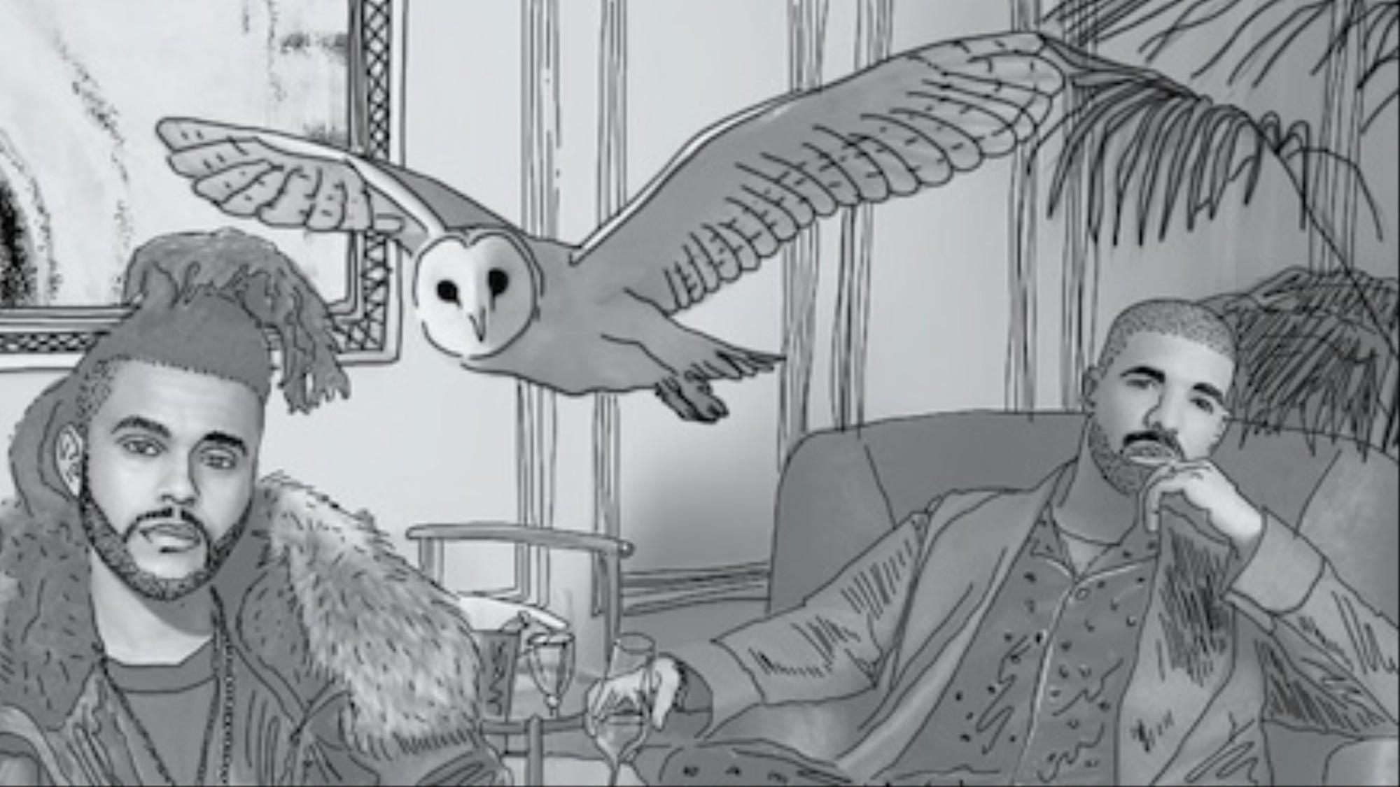 Owls: A Drake Story - VICE