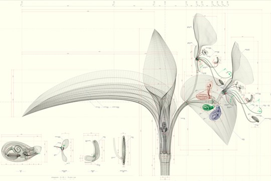 Unusual Anatomical Flowers Designed By Computer Software