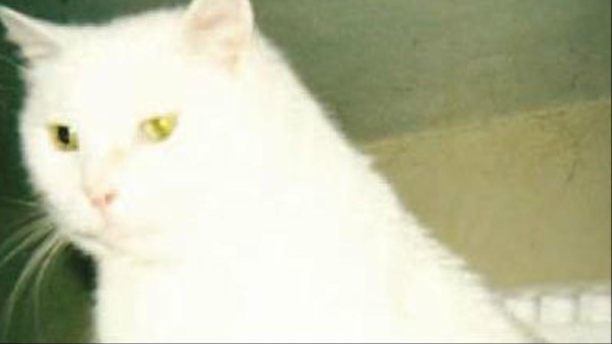 El gato sagrado - VICE