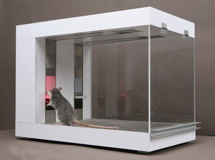 J'ai entraîné des rats à spéculer mieux que les traders de Wall Street