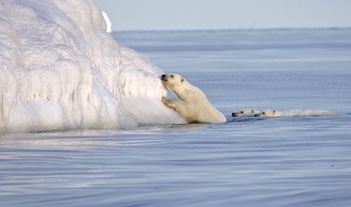 This Nunavut Photographer Takes Stunning Photographs of Arctic Life