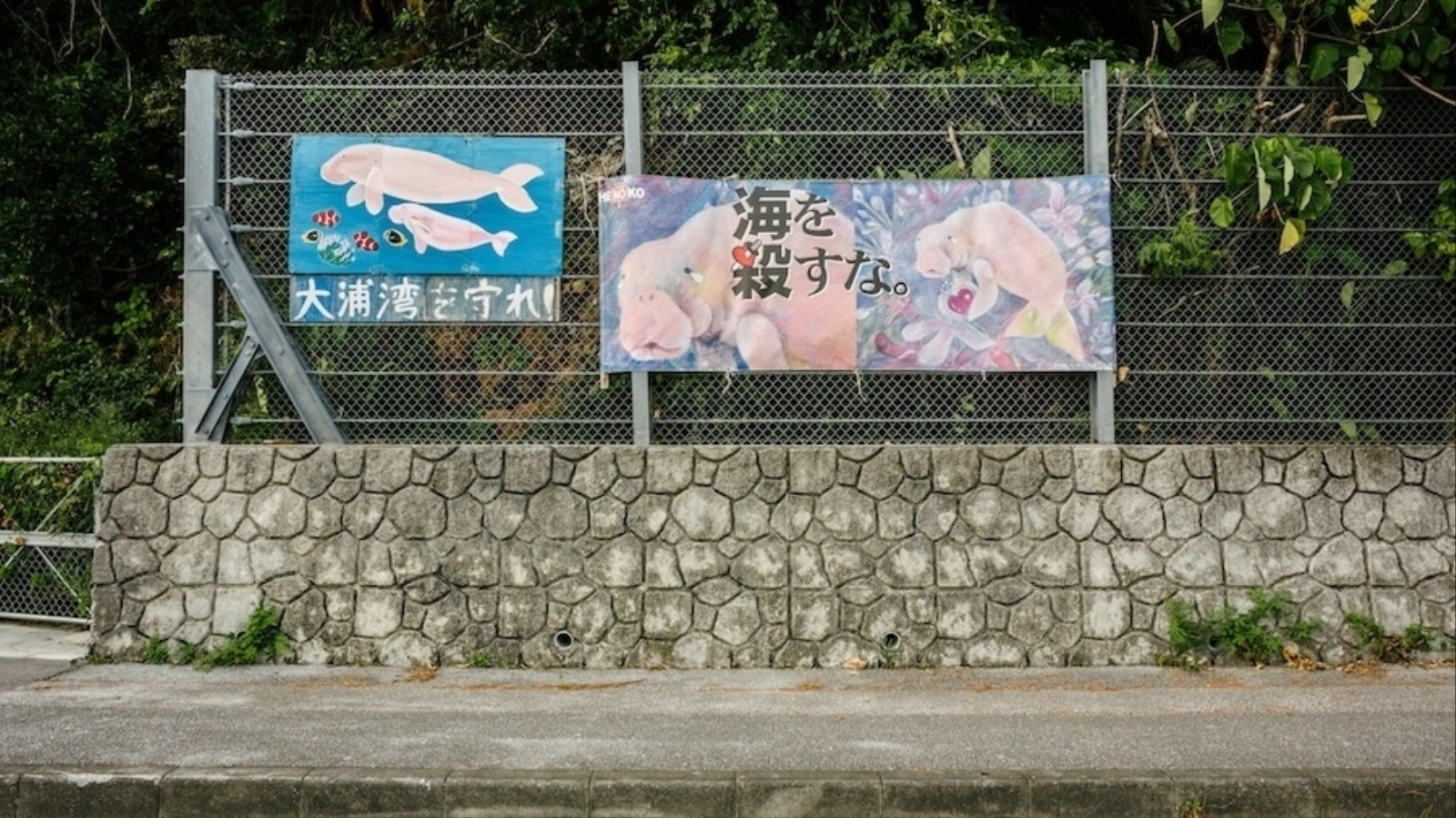 A US Military Base Could Kill Off Japan's Last Dugongs