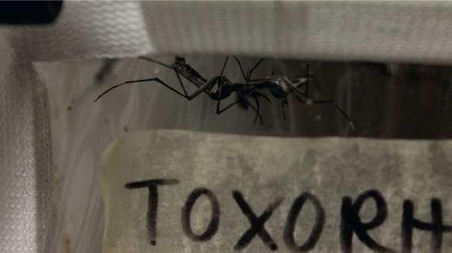Londons unterirdisches Mückenlabor - VICE